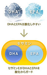 セサミンとビタミンEが酸化防止に役立つ